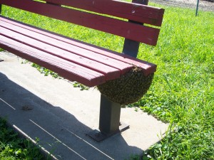 bees-on-a-bench_sm