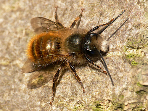 how to get rid of bees nest in ground uk