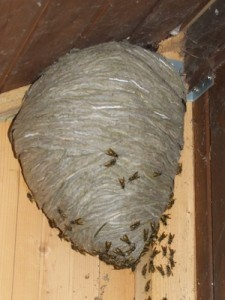 wasp-nest-2-225x300
