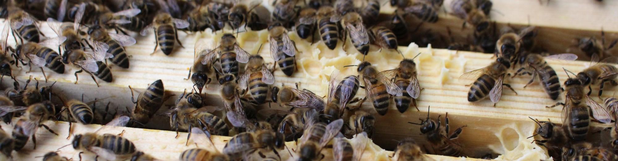 East Lancashire Beekeepers Association